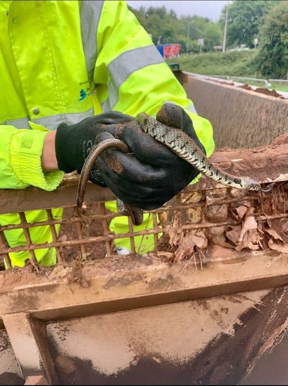 Our eco-friendly industrial vacuum excavator Bristol saved grass snakes on Highways England motorway job yesterday.