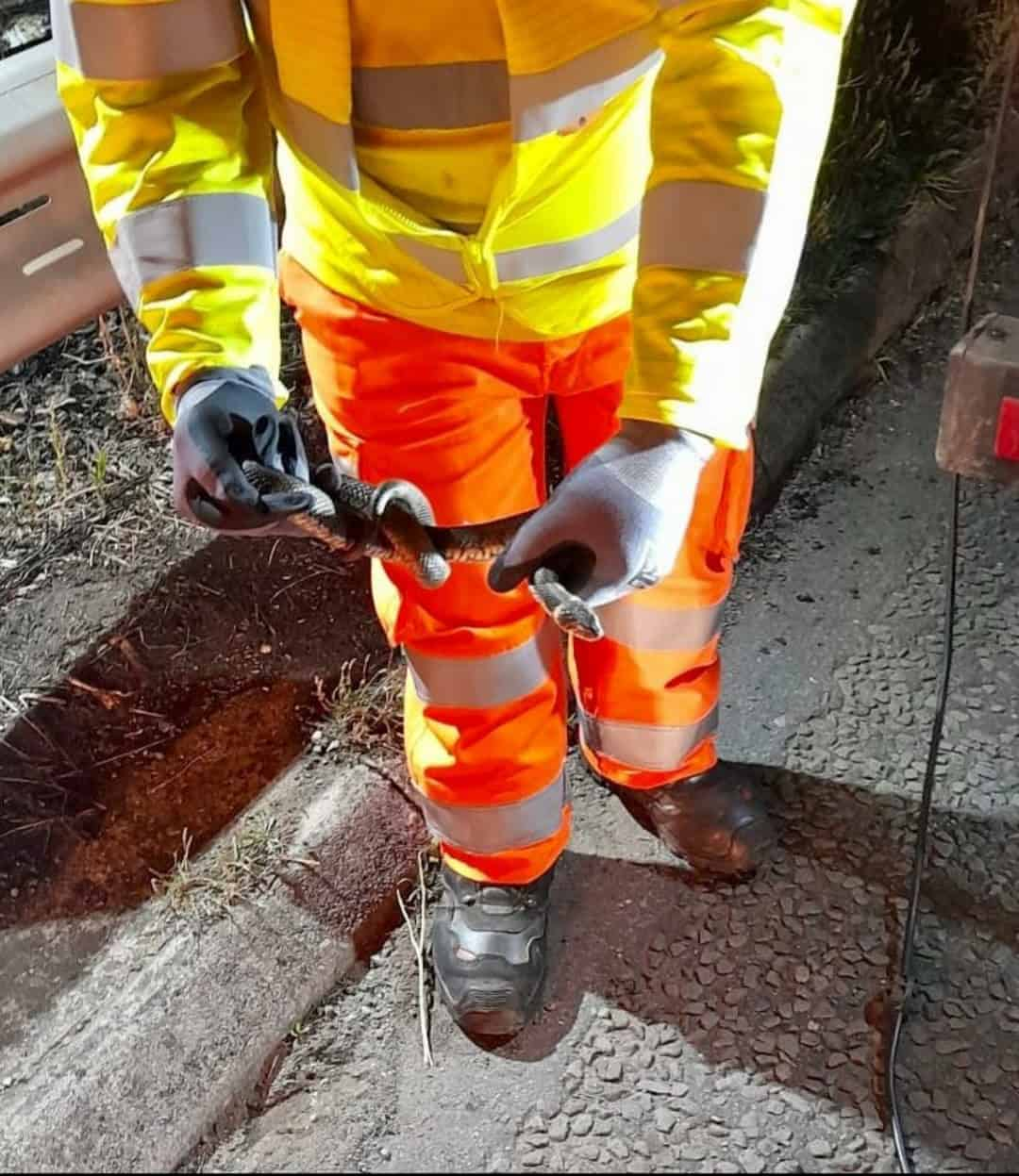 Grass snakes saved on Highways England job by industrial vacuum excavator Bristol
